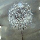 delicate dandelion by Hannah Clair Phillips