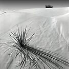 White Sands, New Mexico by Pete Paul