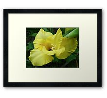 a beautiful flower of gladiolus Framed Print