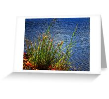 Lake Edge Greeting Card