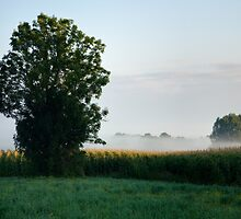 Morning light over the marshes by Ian Middleton