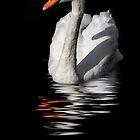 swan reflected in  dark water by guido nardacci