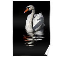 swan reflected in  dark water Poster