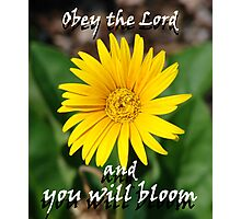 """Obey the Lord and you will bloom"" Color by Carter L. Shepard Photographic Print"