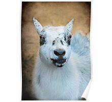 Ms. Pygmy Goat ~ Poster