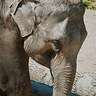 Elephant by Vac1