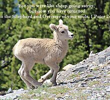 For You Were Like Sheep 1 Peter 2:25 by hummingbirds