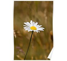 Daisy in a field Poster