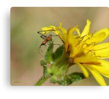 Grasshopper Investigating His Macro World Canvas Print