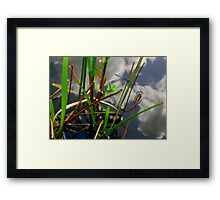 By the lake... Framed Print