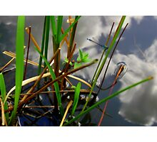 By the lake... Photographic Print