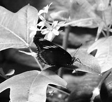 B & W Butterfly On a Leaf by ThinkPics