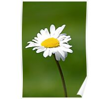 A lone daisy  Poster