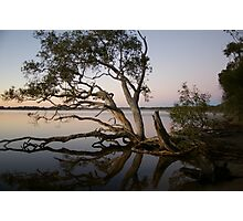 The Lake Trees Photographic Print