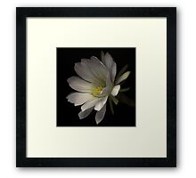 The first White Cactus flower Framed Print