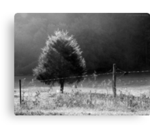 Morning Fog O'er Cow Pasture Canvas Print