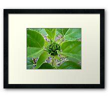 Flower Bud Framed Print