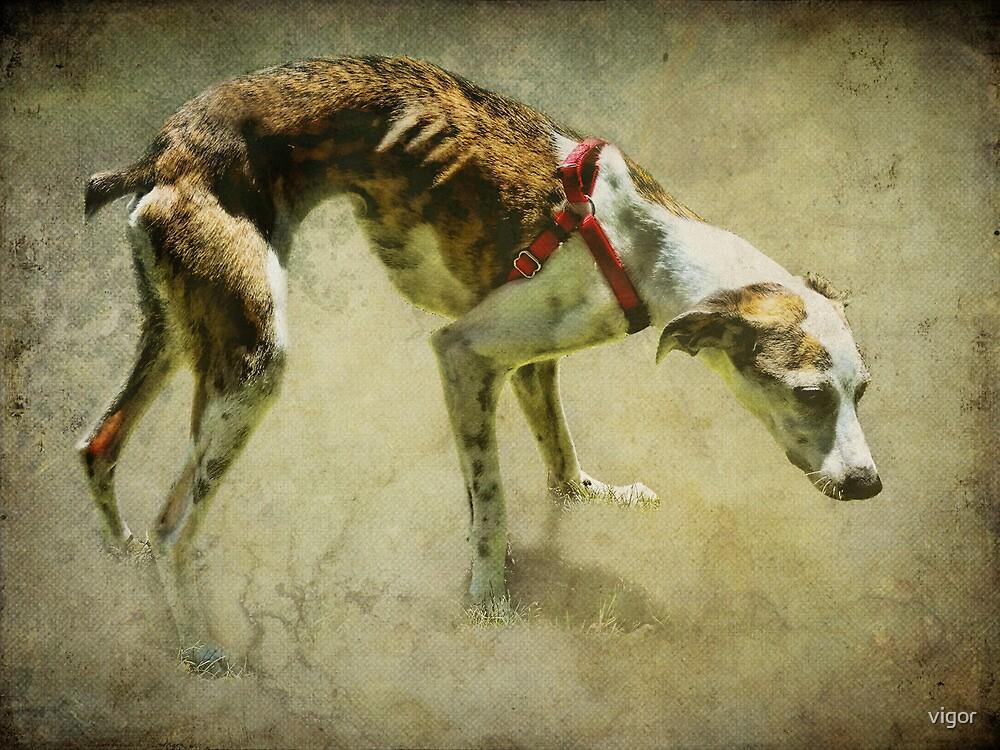 Rescued Greyhound by vigor