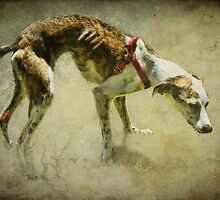 Rescued Greyhound by vigor
