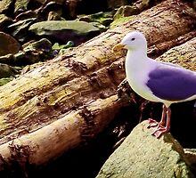 Seagull by kendlesixx