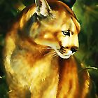 Cougar (Puma concolor) by Terry Bailey