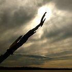Lake Somerville by Larissa  White Edwards