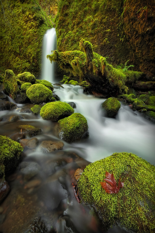 Survivor of the Fall by Tula Top
