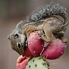 Prickly Pear Breakfast  by Saija  Lehtonen