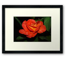 Uncommon color Framed Print