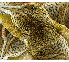 Designs Inspired By Nature: Green Woodpecker Photographic Print