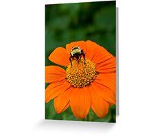 Tithonia Bee Greeting Card