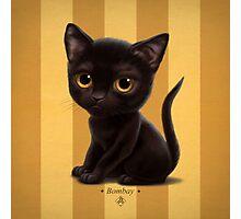 Cataclysm - Bombay Kitten - Stripes Photographic Print
