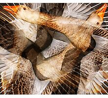 Designs Inspired By Nature: Greylag Goose Flight Photographic Print