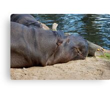 Harry The Happy Hippo Canvas Print