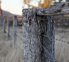 The Fence Post by Saraswati-she