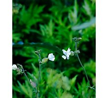 Flower Chat Photographic Print