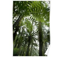 Foggy Tree Fern Forest - Pohnpei, Micronesia Poster
