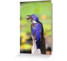 The Azure Kingfisher Greeting Card