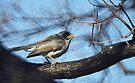 A Common Bird by yolanda