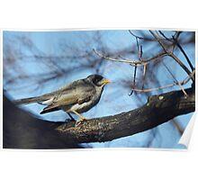 A Common Bird Poster