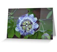 Climbing Passion Flower Greeting Card