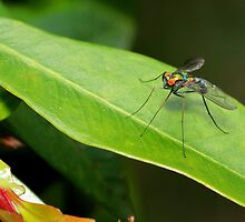 Long-legged fly on a leaf by George Benedek