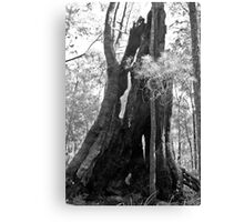Old Tree in Black and White Canvas Print