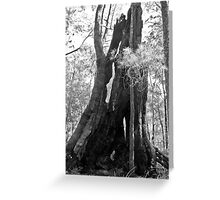 Old Tree in Black and White Greeting Card