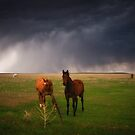 Horses In The Storm by John  De Bord Photography