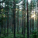 Pine Forest by JuliaPaa