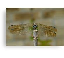 Dragonfly Head-on Canvas Print