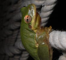 Frog Siesta - Just Hanging Out by MTKlima