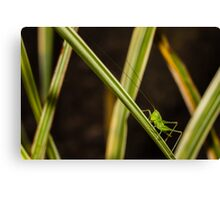 Check Out My Antennae Canvas Print
