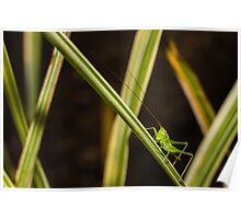 Check Out My Antennae Poster
